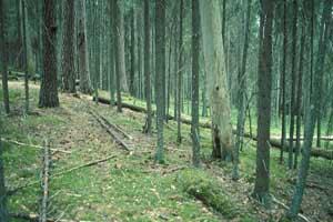 Metsän Sukkessio